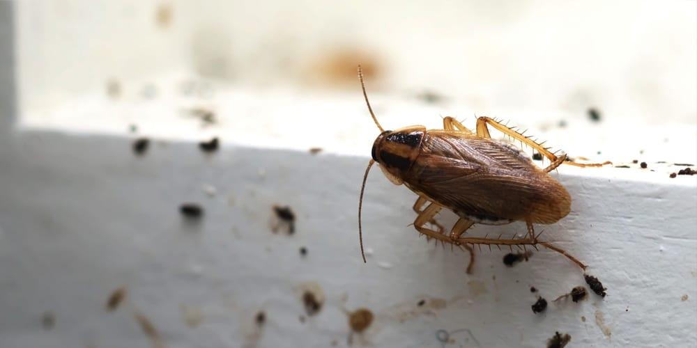 best roach exterminator control company anaheim hills yorba linda orange county