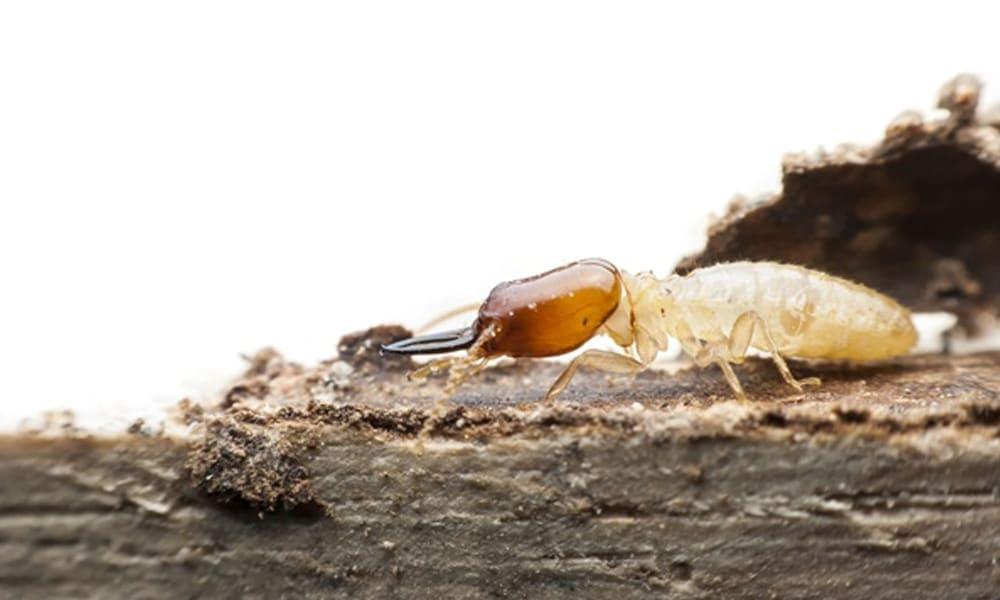 top professional termite inspection company anaheim hills yorba linda orange