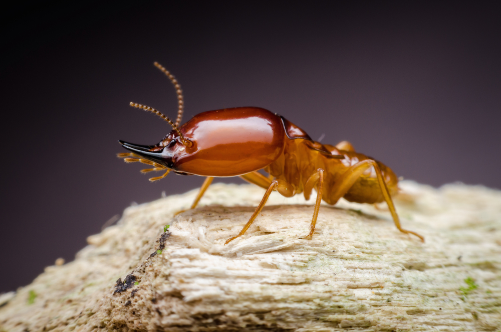termite treatment pest control company anaheim orange county