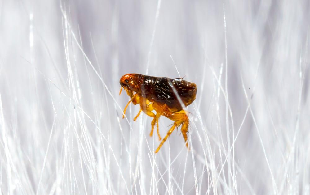 flea-pest-bug-control-company-anaheim-hills-yorba-linda-fullerton