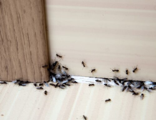 7 Summer Pests You're Likely to Run Into