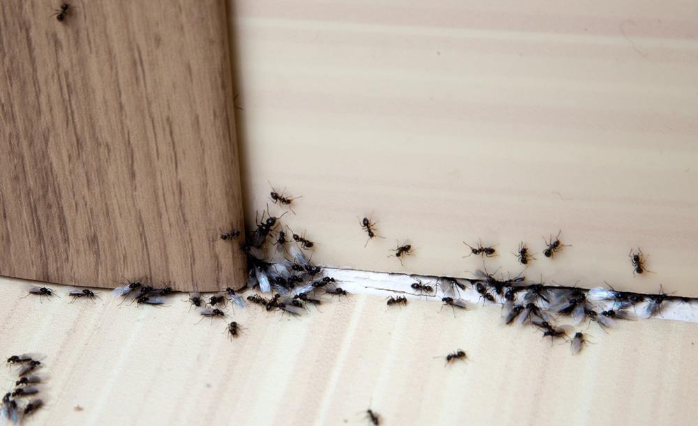 summer-pests-pest-control-anaheim-hills-yorba-linda