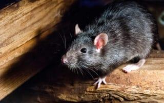 pest-and-rodent-control-anaheim-yorba-linda-orange-county