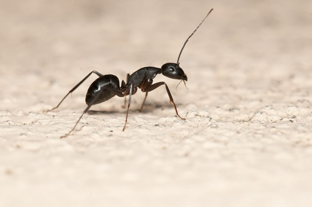 ant-pest-control-company-anaheim-yorba-linda-orange-county