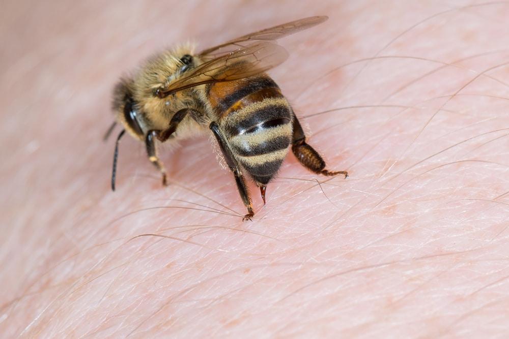 bee-sting-pest-control-company-anaheim-hills-orange-county-ca
